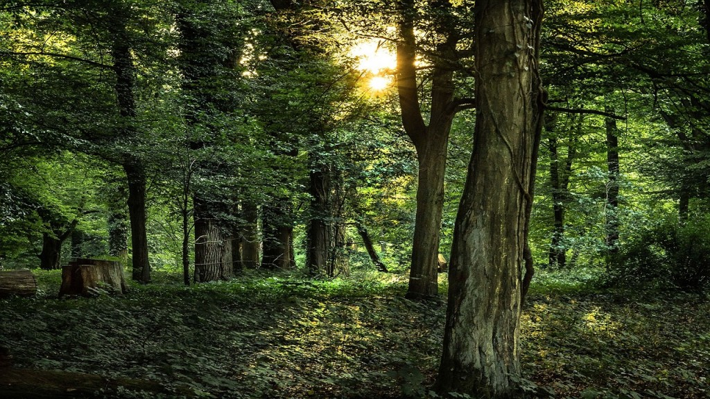 forest-892222_1280